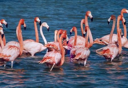 Akyatan Kuş Cenneti