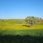 Bingöl İlinin Coğrafyası, Yüzölçümü, Nüfusu ve İklimi