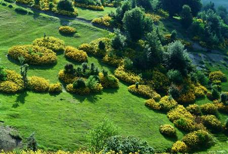 amasya bitki örtüsü