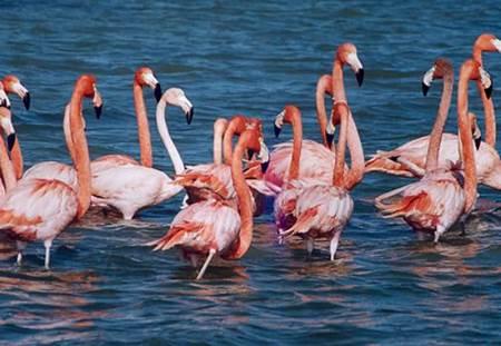 balıkesir kuş cenneti milli parkı