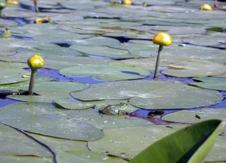 Bolu Abant gölü-12