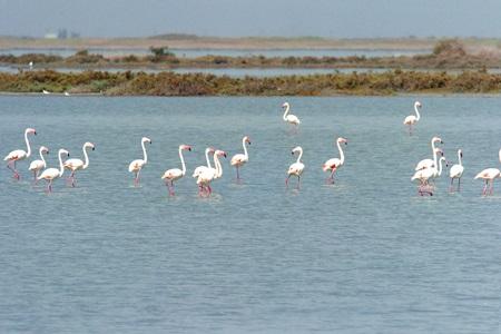 Adana Akyatan Gölü