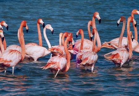 Balıkesir Doğal Güzellikleri - Kuş Cenneti Milli Parkı-2