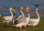 Balıkesir Doğal Güzellikleri - Kuş Cenneti Milli Parkı-3
