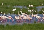 Balıkesir Doğal Güzellikleri - Kuş Cenneti Milli Parkı-4
