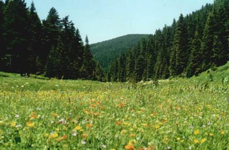 Bilecik Doğal Güzellikleri - Kömürsu Yaylası-2