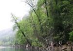 Sığla Ormanı Tabiatı Koruma Alanı