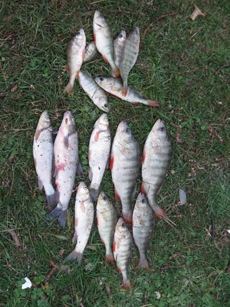 Ladik Gölü Balıkları